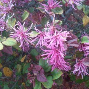 flowers 3-2013